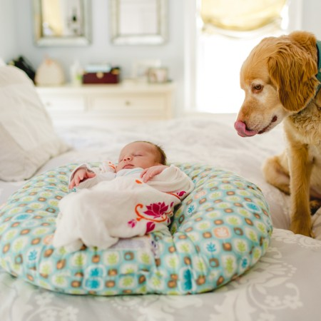dog licking mouth looking at baby