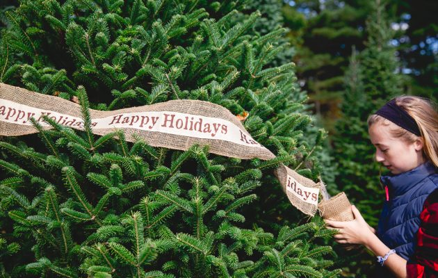 family traditions happy holidays banner around tree