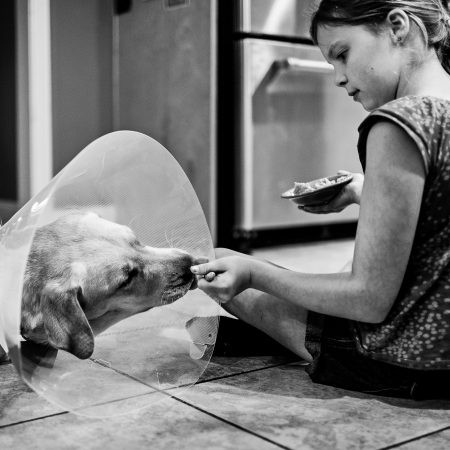 little girl feeding dog wearing a cone with spoon