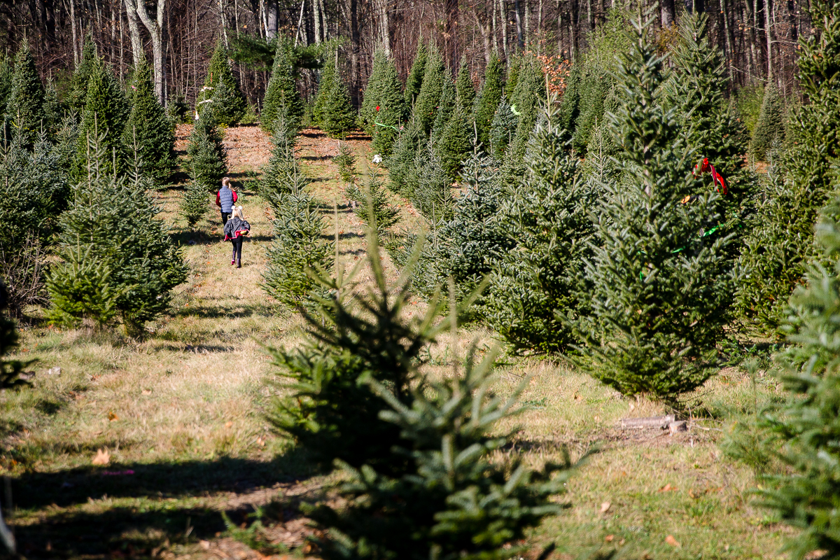 girls running through field of Christmas trees