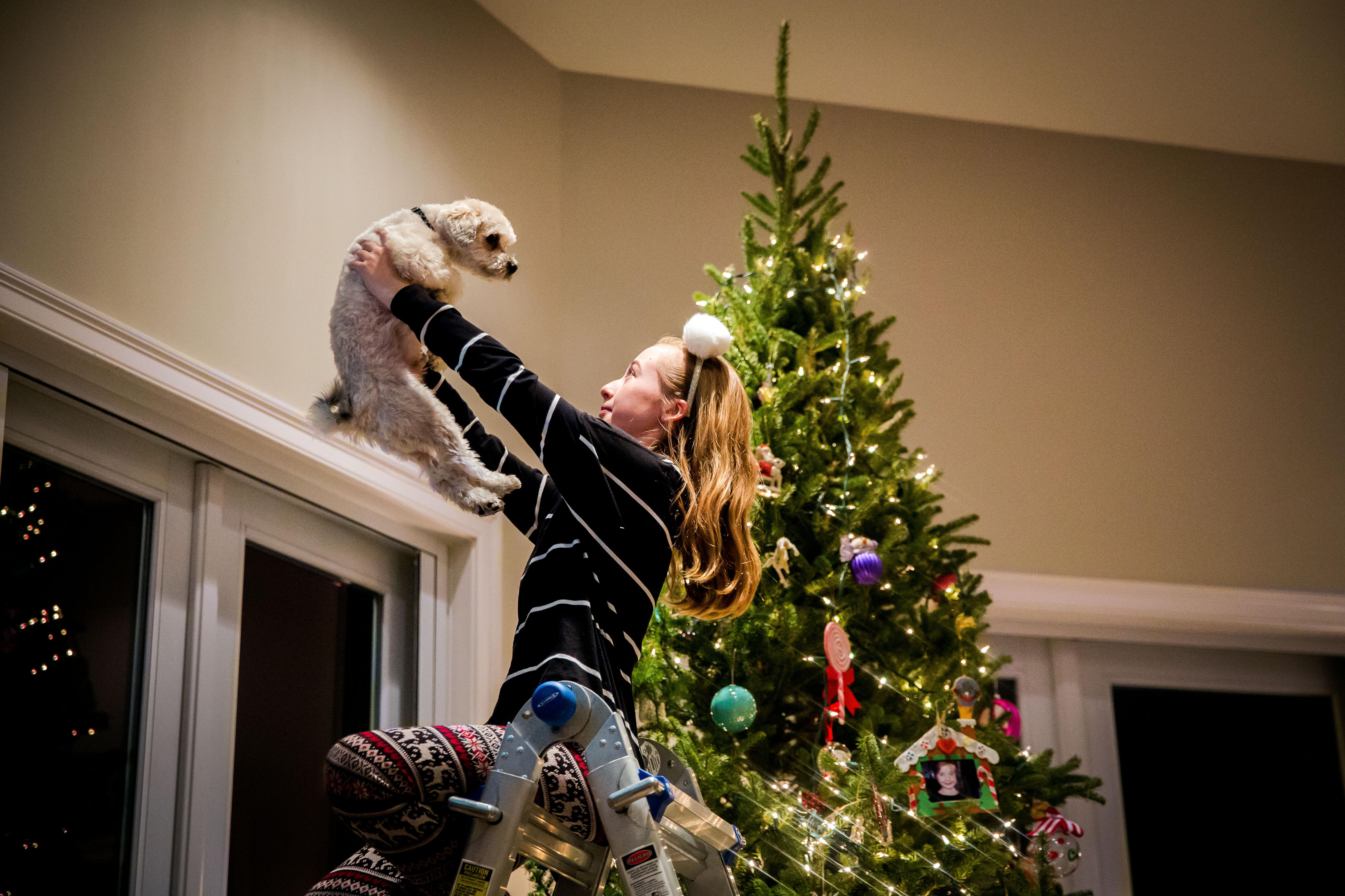 Little girl holding small white dog up overhead