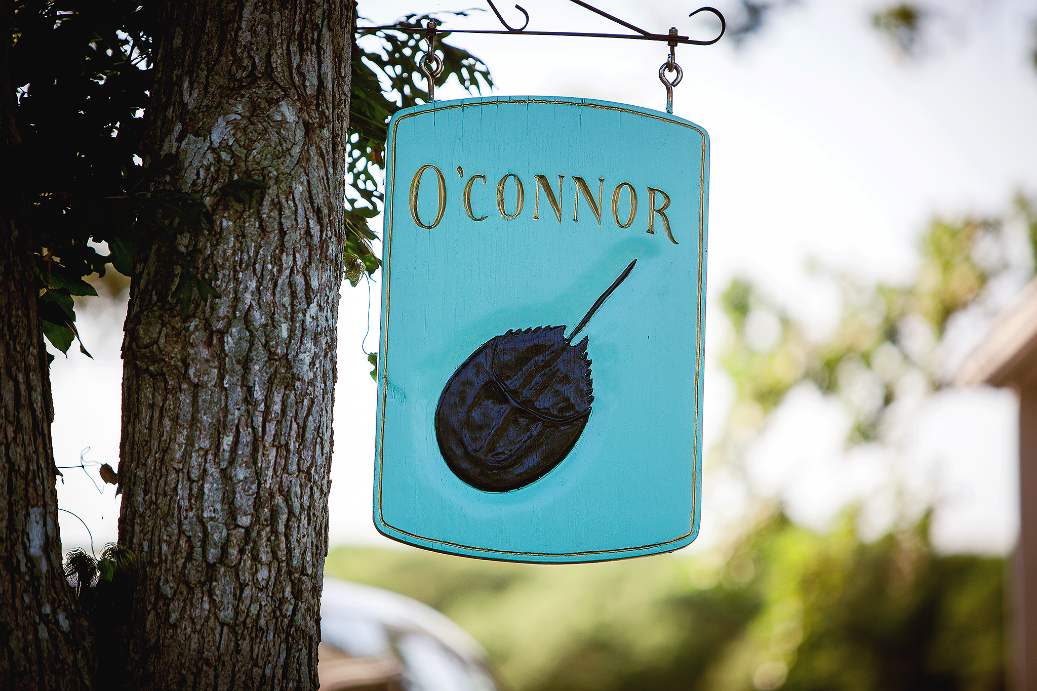 blue sign with horseshoe crab named O'Connor