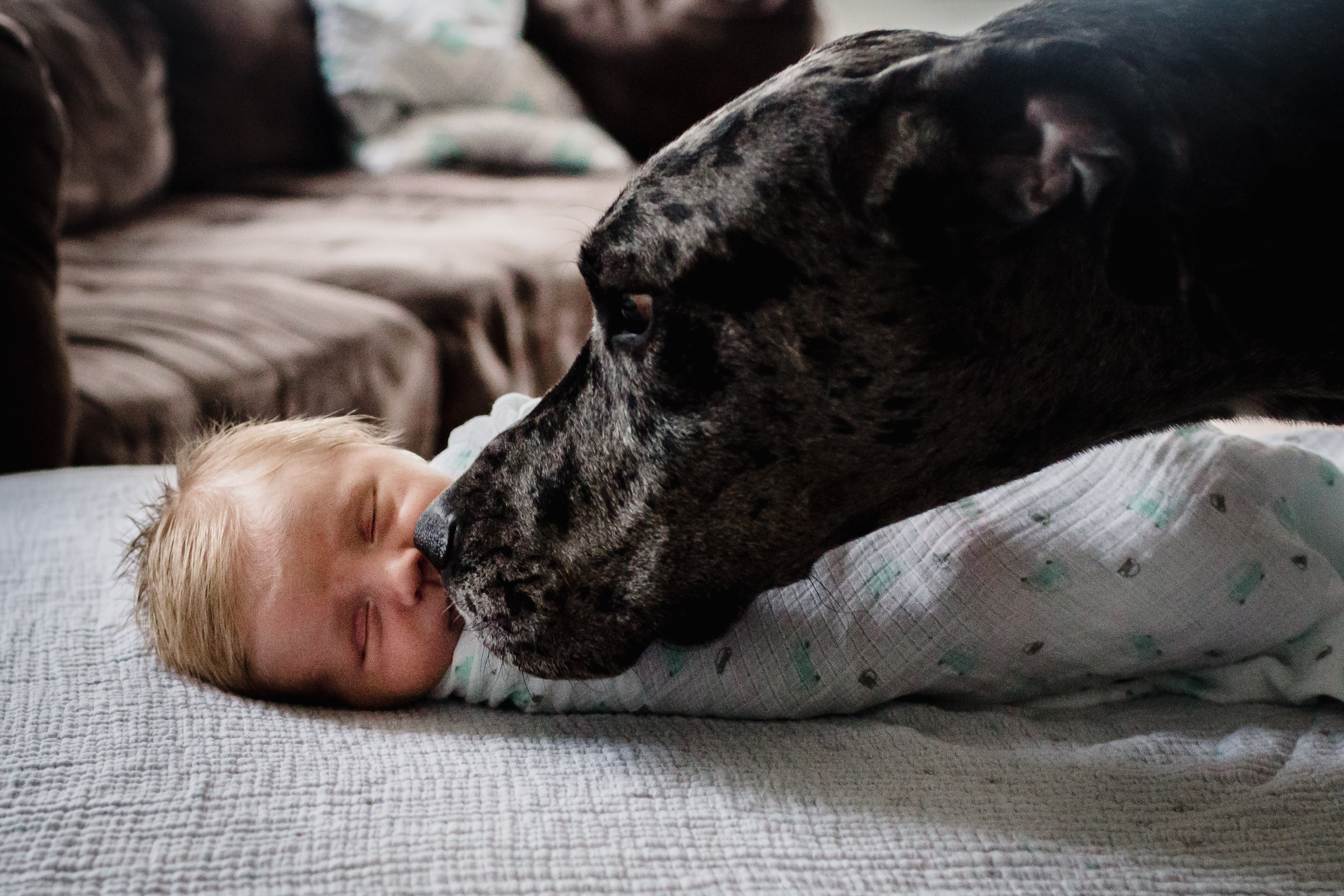 dog sniffing a newborn baby's face